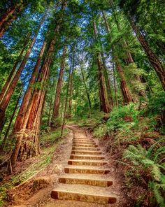Visit a rainforest in Muir Woods. | 14 Ways To Tour The World Without Leaving California