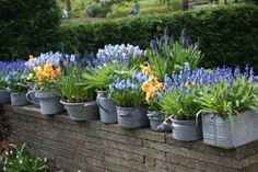 Autumn in Australia is the best time to plant your Spring flowering bulbs. Read our hot tips on how to plant bulbs in pots and grow hydroponically in vases. Garden Bulbs, Planting Bulbs, Garden Plants, Spring Flowering Bulbs, Spring Bulbs, Bulb Flowers, Flower Pots, Potted Flowers, Container Gardening