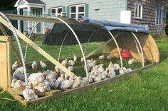 hoop design chicken tractor
