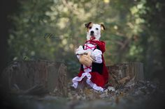 Little Red Riding Hood by Heavenly Pet Photography #dog #jackrussell #photographer #pet #pets