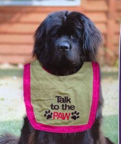"""""""Talk to The Paw"""" Embroidered Large Dog Drool Bib Pink Green Terrycloth Double 