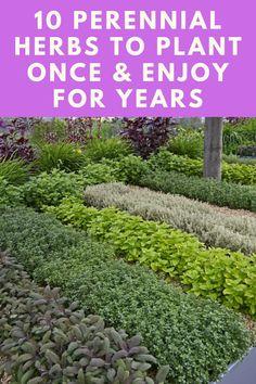 Herb Garden, Vegetable Garden, Garden Plants, Thyme Plant, Mint Plants, Perennial Vegetables, Growing Herbs, Medicinal Plants, Container Gardening