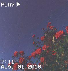 M O O N V E I N S 1 0 1 vhs aesthetic video play time august vintage retro flowers flower red green blue sky 397864948331267006 Night Aesthetic, Film Aesthetic, Aesthetic Drawing, Aesthetic Images, Aesthetic Collage, Flower Aesthetic, Aesthetic Videos, Aesthetic Grunge, Aesthetic Vintage