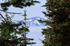 Mt. Olympus at Hurricane Ridge | Burm Voyage