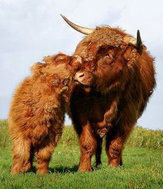 14 Heartwarming Photos of Animals Showing True Love Knows No Bounds | One Green Planet