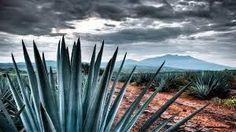 Arandas, Jalisco – ViveArandas.com – ¿Que paso con el tequila durante el periodo 2006-2011?