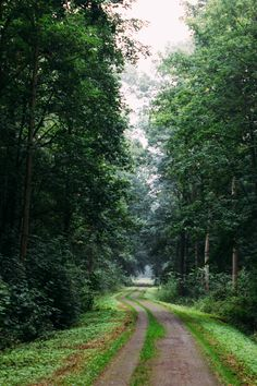 Forest road (Germany) by Oliver Dressler cr. Forest Path, Forest Road, Beautiful Places, Beautiful Pictures, The Road Not Taken, Back Road, Road Trippin, Science And Nature, Places Around The World