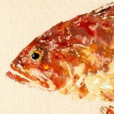 Red Grouper - Gyotaku Fish Rubbing - Limited Edition Print (21.5 x 11)