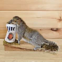 Drunken Squirrel Taxidermy Mount for sale at Safariworks Taxidermy Sales Funny Taxidermy, Taxidermy Decor, Taxidermy Display, Taxidermy Bat, Taxidermy Jewelry, Butterfly Taxidermy, Deer Mount Decor, Deer Decor, Antler Crafts