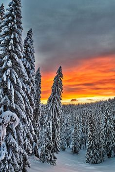 It is real - nature and skiing together! ~~Unreal ~ epic winter snow scene, Rhodope Mountains, Smolyan, Bulgaria by Evgeni Dinev~~ Winter Szenen, Winter Magic, Winter Sunset, Snow Scenes, All Nature, Winter Beauty, Ciel, Beautiful World, Beautiful Sunset