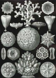 """Ernst Haeckel - Art Forms of Nature, """"Kunstformen der Natur"""", Art And Illustration, Illustrations, Illustration Fashion, Pattern Illustration, Art Et Nature, Nature Drawing, Science Nature, Ernst Haeckel Art, Natural Form Art"""