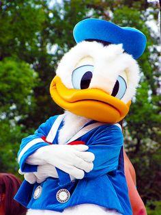 "Donald Duck ""Hummm Where& my Daisy Lady"" Disney Dream, Cute Disney, Disney Girls, Disney Magic, Disney Pixar, Walt Disney, Duck Wallpaper, Disney Wallpaper, Donald And Daisy Duck"
