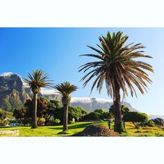 Yes Friday I feel you...... #friyay #morningvibes #twelveapostles #capetown #12apostles #mountain #palmtree #campsbay #southafrica #nhatgeo by nhatgeo http://ift.tt/1ijk11S