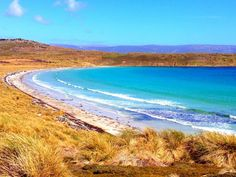 Carcass Island, Falkland Islands, Falklands, beach, gentoo penguins, Carcass Island Farmhouse