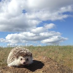 We could all stand to be a little more like Biddy. | The Fantastic Adventures Of Biddy The Hedgehog