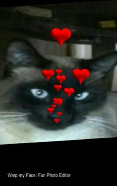 My Kitty with LOVE