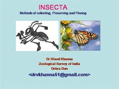 Collecting setting and preserving Insects  by Vinodkhanna via authorSTREAM