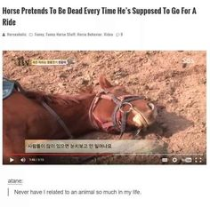 The relatable horse.