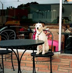 Our guide to dog-friendly coffee shops in Los Angeles! Serving hot or cold drinks that are perfect for enjoying all year long.