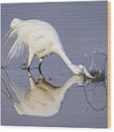 Great Egret Dipping For Food Wood Print by Bill And Deb Hayes