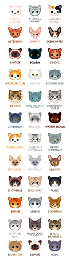 Kawaii cat breeds for the Сat-people of the world 😉 Races de chats Kawaii pour les peuples du monde; I Love Cats, Cute Cats, Funny Cats, Funny Animals, Cute Animals, Cats Humor, Baby Animals, Baby Giraffes, Chat Kawaii