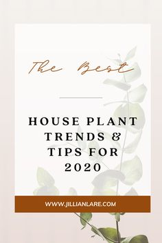 Learn the latest trends in house plants for 2020 as well as tips for choosing the right pot and keeping your plants healthy and thriving. #houseplants