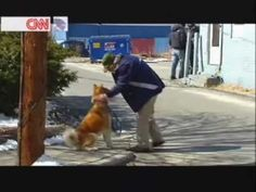Hachiko A Dog's Story Behind The Scenes - Richard Gere video - Fanpop Hachi A Dogs Tale, A Dog's Tale, Why I Love Him, Loyal Dogs, Richard Gere, Dog Stories, Live In The Now, Cute Gif, Love At First Sight