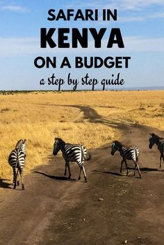 How to do a safari in Kenya on a budget for only $170 - A step by step guide to do a cheap safari in the Masai Mara