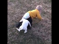 best funny babies and animals compilation new 2018 Best Short Films, Funny Babies, Short Stories, Youtube, Animals, Animales, Animaux, Animal, Animais