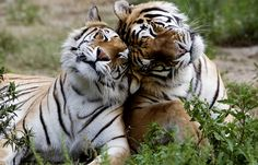 beautiful animals, a species that truly needs to be allowed to naturally repopulate.