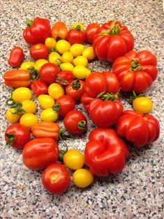 Tomates du jardin - juil. 2016