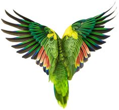 parrot wings by Andrew Zuckerman Tropical Birds, Exotic Birds, Colorful Birds, Tropical Paradise, Parrot Wings, Bird Wings, Angel Wings, Art And Illustration, Illustrations