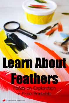 Learning About Bird Feathers: Explore, Color, and Label Free Printable -