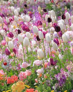 "3,229 aprecieri, 38 comentarii - Admin @yennykey (@ip_blossoms) pe Instagram: "".Hello .. . It's Yenny @yennykey , highlighting my favorite flower picture in motions. …"""