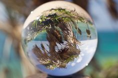 Paradise in a Ball Mexican Palm in a ball shared with pixbuf.com