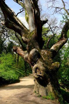 Gnarley old Tree