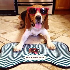 How to Make One-of-a-Kind Customized Pup Products Every Dog Person Will OBSESS Over