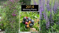 Winning Plants To Look For In 2014
