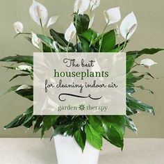 Houseplants have come back into favor after a long period on unpopularity. Perhaps it's because of their air filtering properties, a renewed interest in gardening, or simply their attractiveness. Regardless,...