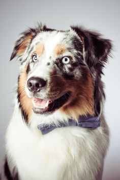 The 34 Best Jouke Notre Gagnant Images On Pinterest Happy Dogs