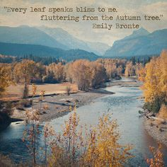 """My contribution to the """"write a cool fall quote on a cool fall pic"""" craze. Photo from Fall 2012, which was particularly glorious here in Montucky. #fall #montanafall #fallleaves #fallcolor"""