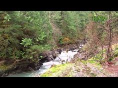 irtual Hike in the Olympic National Forest, 38 Minutes, Washington State - YouTube