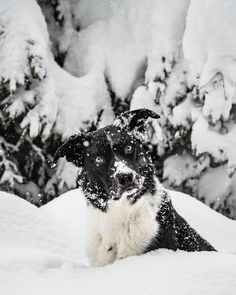 """Gefällt 101 Mal, 14 Kommentare - Lausbuampfoten (@caesarthebordercollie) auf Instagram: """"""""A dog is the only thing on earth that loves you more than you love yourself."""" #salzburg #austria…"""" Salzburg Austria, Love You More Than, That's Love, Earth, Dogs, Instagram, Pet Dogs, Doggies, Mother Goddess"""