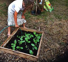 Viola innaffia le piccole piante di zucchina cresciute nel semenzaio dell'arto di Calarossano.