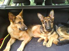 My sweet two girs - Vega and Arica