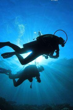 Lass dich mitnehmen in die wunderschöne Unterwasserwelt von Eilat! Dieses Paradies im Roten Meer wartet nur darauf von dir entdeckt zu werden! Lerne die Delfine am Dolphin Reef und die Clownfische kennen! Jetzt abtauchen!  #Tauchen #RotesMeer #Eilat #Israel #Reisen Eilat, Wanderlust, Scuba Diving, Sci Fi, Earth, Nature, Beautiful, Israel Tours, Clownfish
