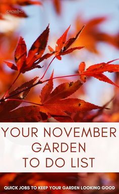 Welcome to your one-stop resource for gardening in November. If you always feel like you don't have enough time for gardening, or just need some guidance on what to focus on each month, this is the series for you! #gardening #gardeningtips #growingfamily