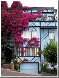Can I just say that I really really really really want a pink tree climbing up my house?!!