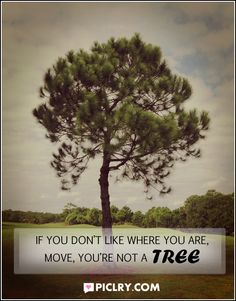 If you do not like where you are, move, you're not a tree. #QuotePhoto #SayingImages
