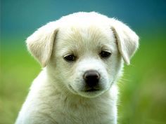 Cute looking doggie with pleasing eyes!